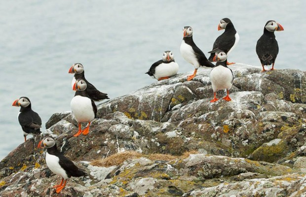 Liverpool y Puffin Island