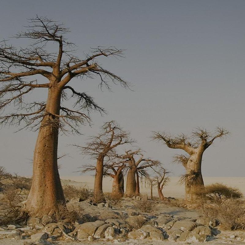 Makgadikgadi Pans (Parco Nazionale)