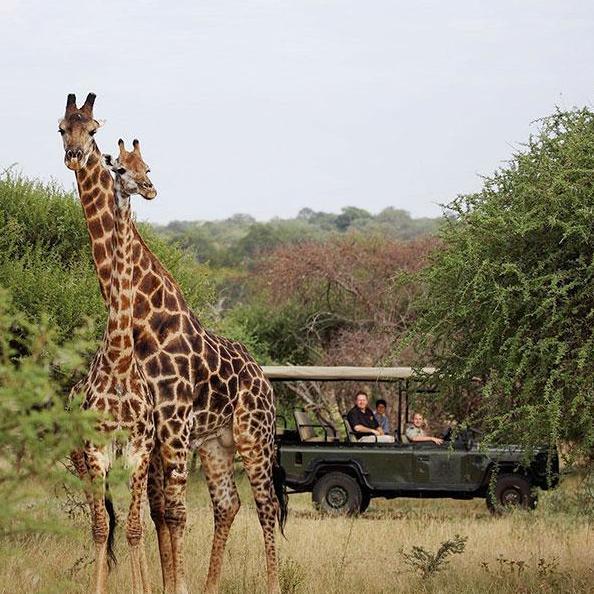 Limpopo (provincia)
