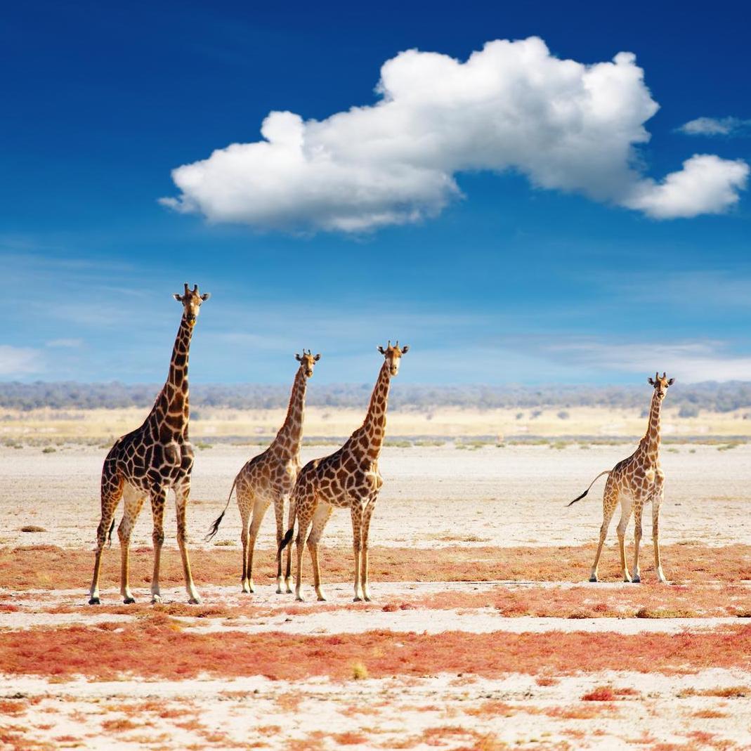 Parco Nazionale Etosha